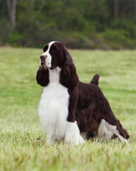 Reserve Best In Show National Dog Show